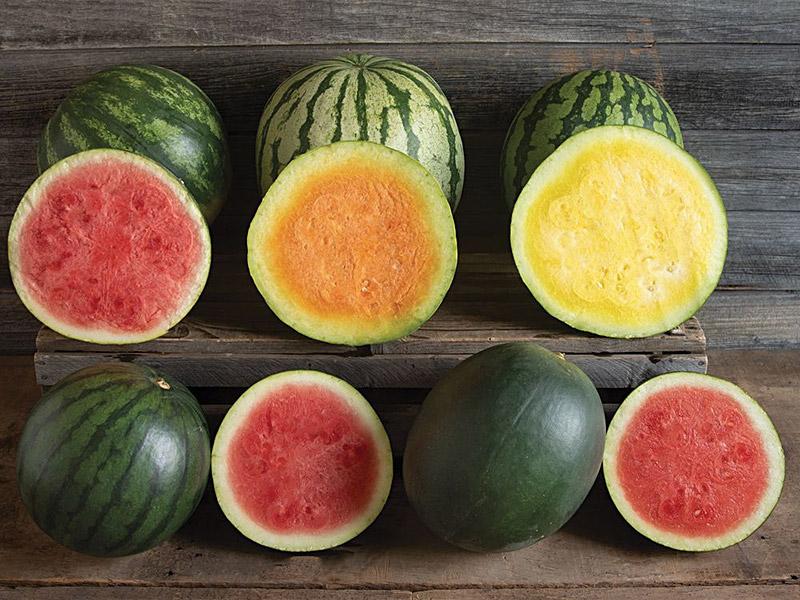Johnny's Selected Seeds watermelon varieties