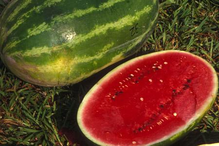 Fiesta Watermelon, photo courtesy of Dr. Todd C. Wehner, North Carolina State University