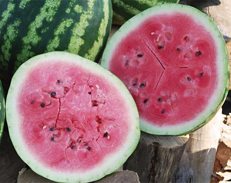 Sweet Dakota Rose Watermelon, photo courtesy of Vermont Bean Seed Company